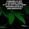 PA_TJ Cannabis Network Avatar